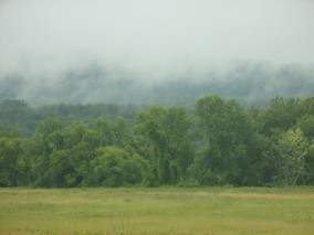 Rain evaporating off the forest